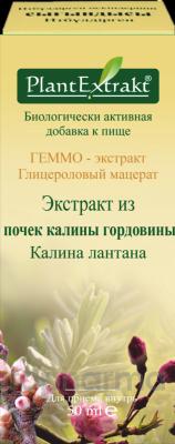 ГЕММО - экстракт из почек калины гордовины 50 мл, фл., Калина лантана